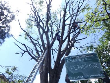 高木剪定の写真